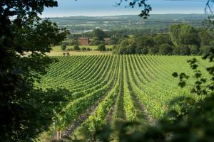 6. Vineyards and Woods